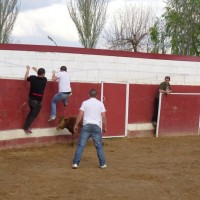 Capea de soltero en Logroño